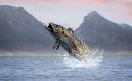 WPT好文分享-鱼才会经常慢打!五条帮你稳定水上的黄金策略